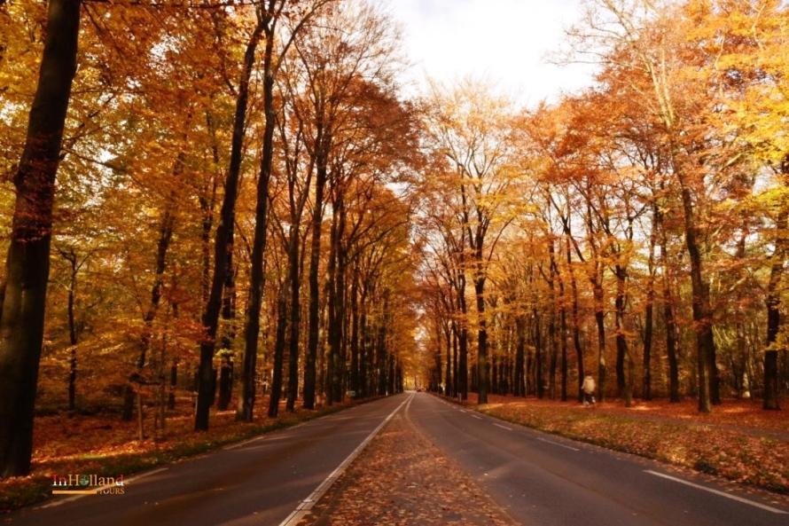 musiman di Belanda