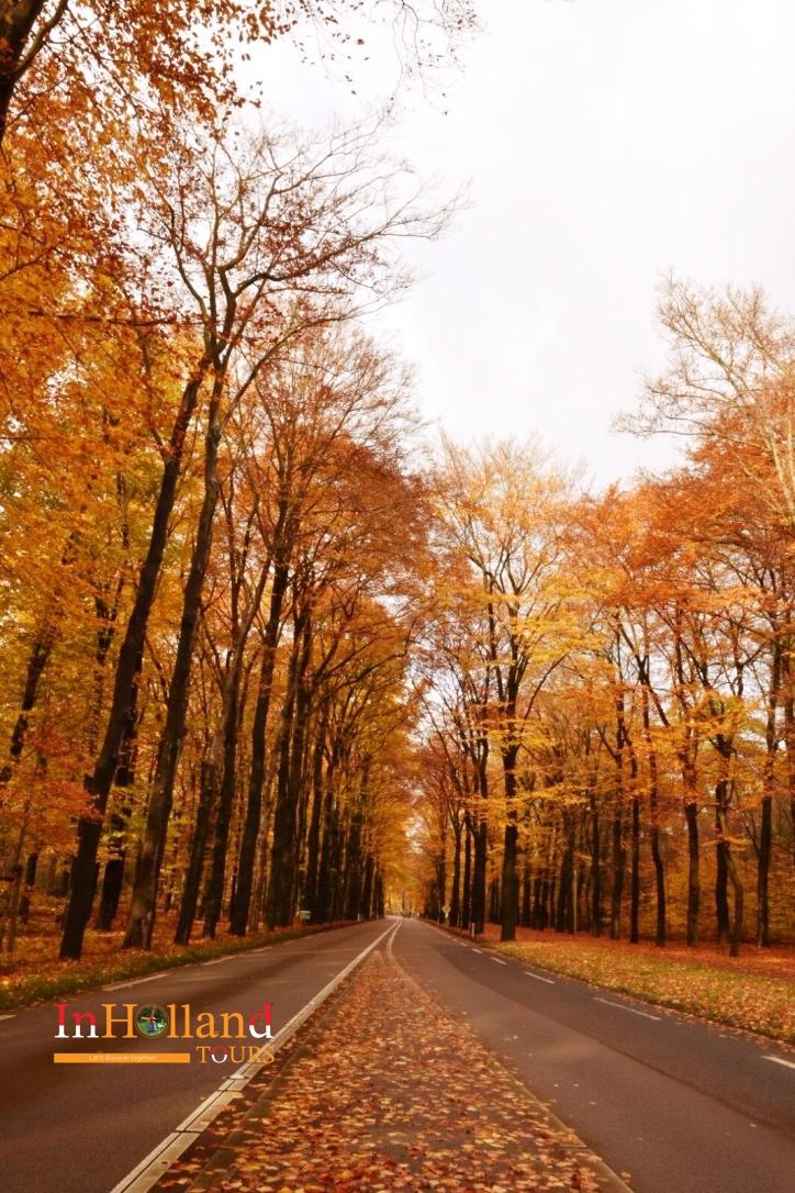 musim gugur di belanda