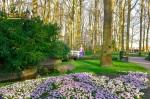 Bunga tulip di Keukenhof South Holland Eropa