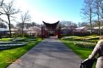 Taman tulip di Eropa Barat bersama IndoHolland Tours