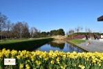 Tulips in Lisse Keukenhof Holland Europe