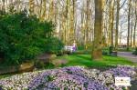 Tulip di Lisse Keukenhof Belanda Selatan Eropa