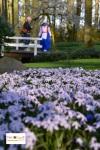 Bunga Tulip di Lisse Keukenhof South Holland Belanda Eropa