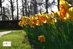 Bunga tulip di Lisse Keukenhof, Belanda Eropa