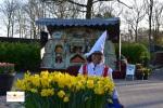 Tulips in Keukenhof Holland Europe